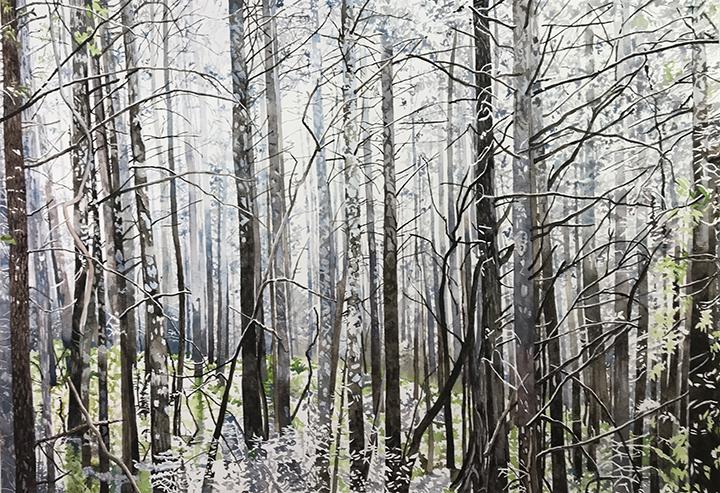 Dark, leafless, tall skinny trees, misty sky
