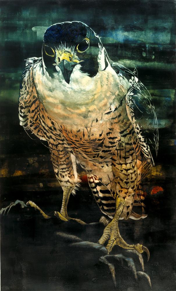 Pele (Peregrine Falcon)